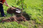 به یاد دکتر بسکی و در باب ۱۵ اسفند روز درختکاری
